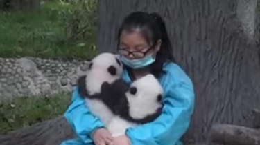 Could this be the BEST job ever? Professional Panda Hugger!