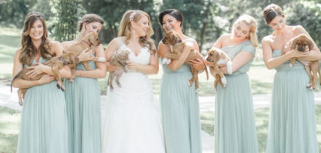 Bridesmaids pose with rescue puppies instead of bouquets.